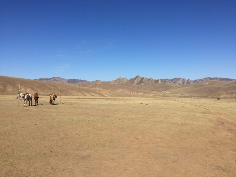 Horses waiting Mongolian ger camp